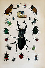 Repro Natural History Print of Insects #20