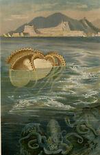 Antique Print-NAUTILUS-NAUTILIDAE-Brehm-1890