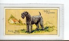 (Jc3777-100)  OGDENS,DOGS,KERRY BLUE TERRIER,1936,#43