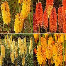 Sub-tropical Evergreen Plants, Seeds & Bulbs
