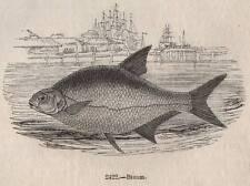 ORIGINALE 1845 Stampa CASTAGNA FLY FISHING PESCA SPORTIVA Pesce Rod Tackle Fiume CESTO 9