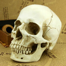 More details for halloween white resin replica skull 1:1 realistic life size human anatomy decor