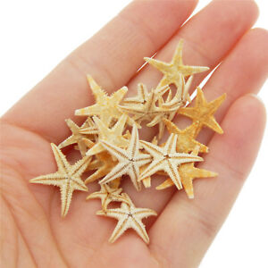 Natural Starfish Tiny Size Flat Crafts Decor For Aquarium Micro-Landscape 40 pcs