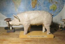 VINTAGE EDUCATIONAL MODEL OF A PRIZE PIG FROM CZECH COLLEGE TEACHING AID