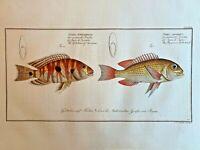 1st EDITION BLOCH OBLONG FOLIO H/C RARE FISH - Gilt-head of Surinam Japan - #277