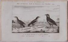 BUFFON ORIGINALE 1850 ROI DES FOURMILLIERS BEFFROI BIRDS ORNITOLOGIA UCCELLI