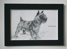 Norwich Terrier Dog Print Gladys Emerson Cook Bookplate 1962 5x7 Matted Cute