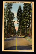 vintage Highway through the Evergreens of the Northwest postcard