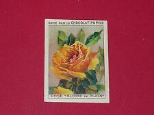 CHROMO PUPIER 1930 ALBUM JOLIES IMAGES SERIE 37 FLEURS ROSE GLOIRE DE DIJON