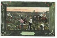 Vintage Post Card c.1909  Cotton Field Pickers Horses Wagon Loading