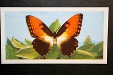Sun Butterfly   Amazonian Butterfly   Vintage Colour Card # VGC