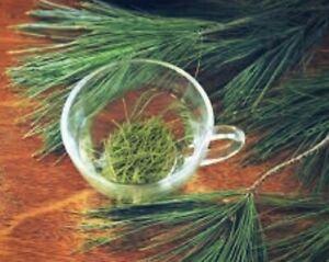 Antioxidant White Pine Needle Tea -35 bags