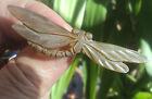 Art Deco French Bull Horn Dragonfly Brooch - Elizabeth Bonte / Georges Pierre