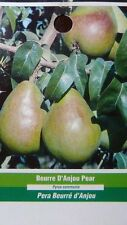 4'-5' BEURRE D'ANJOU PEAR Tree New Plant Health Fruit Trees Natural Pears Plants