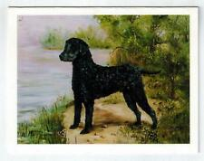 New Black Curly-Coated Retriever Notecards 12 Note Cards By Ruth Maystead (Rcc-2