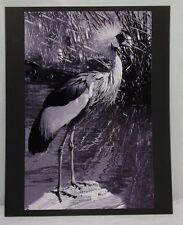 16X20 Original Print Photograph Matted Crown Crane Interior B&W 2007