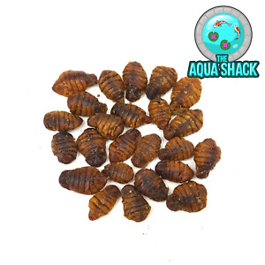 Natural Dried Silkworm Pupae - Japanese Koi Treats Protein Coldwater Pond Food