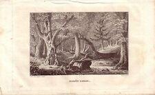 Corsica Corse France Forêt Corse in acciaio chiave gravure de fer 1850