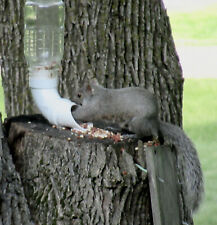 Squirrel Feeder Kit