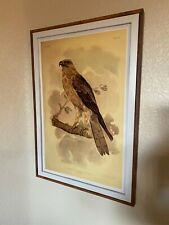 Little Eagle Print In The Frame