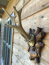 More details for antique black forest taxidermy carve wood scroll mount muntjac deer antlers 1910