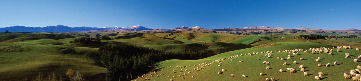 newzealand101