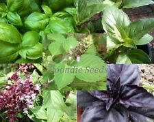 BASIL 8 packets 800 seeds collection HEIRLOOM herb garden mixed Boondie Seeds