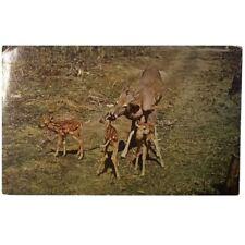 Deer family, Fresno, CA, vintage postcard, 1960, 2942G