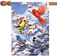 Toland Blue Jay Duet 28 X 40 Colorful Bird Pine Tree House Flag 17917049336 Ebay