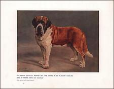 SMOOTH ST. BERNARD DOG, Champion THE VIKING by Cheviot, Cassell, antique 1912