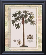 Tropical Palm Tree Vintage Fig 526 Contemporary Wall Decor Black Framed Picture