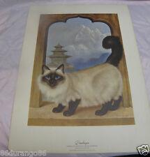 "Girard Goodenow Print Of Painting Himalayan Cat Vintage 1965 14""X19"""