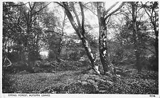 BR96249 epping forest autumn leaves real photo  uk