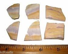 Cretaceous Radiolarian opal stromatolite like fossil rock slice Australia