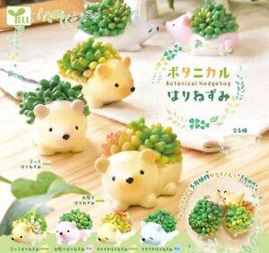 Botanical Hedgehog Succulent Gachapon Gashapon Capsule Toy Japan Cute Kawaii