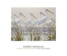 PELICAN ART PRINT Bounty of the Wetlands (detail) by Robert Bateman 20x24 Poster
