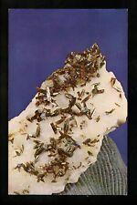 Minerals Stones chrome postcard Endlichite Crystals Chihuahua, Mexico