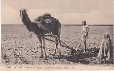 CPA 236 - Maroc - Labourage dans le sud