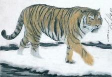 ACEO original pastel drawing  tiger winter wildcat cat by Anna Hoff