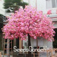 10 Pcs Seeds Red Japanese Cherry Plants Garden Bonsai Tree Sakura Mixed NEW 2018
