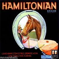 Lake Hamilton Horse Jockey Florida Orange Citrus Fruit Crate Label Art Print