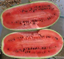 100  Charleston Grey Watermelon Seeds new seed for 2017 Non-GMO Heirloom