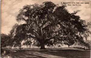Vintage Postcard- Live Oak Tree-New Iberia Louisiana LA -Taylor's Drug Store