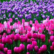 100 Pcs / Bag 25 Mix Varieties Of Tulip Petals Tulip Seeds Potted