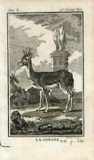 1769 ANTELOPE CORINE Antique Copper Plate Engraving Print BUFFON
