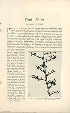 1902 Magazine Article Plant Battles How Plants Attack & Defend Nature Botany