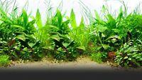 250 graines mix plantes pour aquarium décor - seeds - semillas