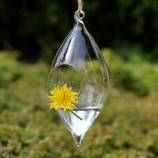 20x Teardrop Clear Glass Vase Flower Terrarium Succulent Wedding flower Vase