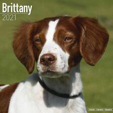Brittany Calendar 2021 Premium Dog Breed Calendars