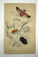 Antique William Home Lizars/William Jardine Hand Colored Engraving Butterfly #9